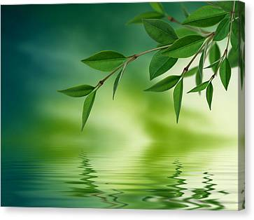 Lush Colors Canvas Print - Leaves Reflecting In Water by Aged Pixel