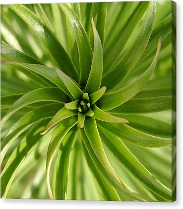 Leaves Spiral Canvas Print
