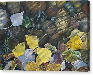 Leaves  Water And Rocks Canvas Print