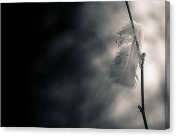 Leave Canvas Print - Left Behind by Hatcat Photography