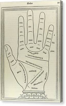 Left Palm Canvas Print by British Library