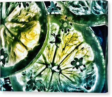 Lemon And Elderflower  Canvas Print by Marianna Mills