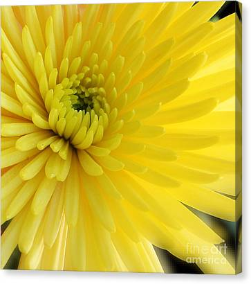 Lemon Mum Canvas Print