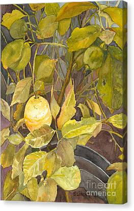 Lemon Tree Canvas Print by Sandy Linden