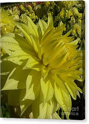 Canvas Print featuring the photograph Lemon Yellow Dahlia  by Susan Garren