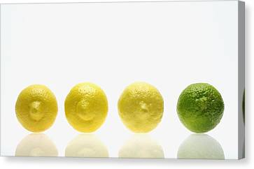 Lemons And Lime Canvas Print by Kelly Redinger
