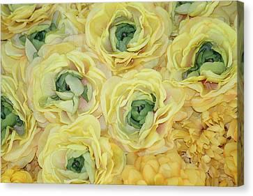 Lemons And Limes Canvas Print by Patrisha Gill