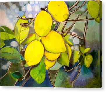 Sour Canvas Print - Lemons by Debi Starr