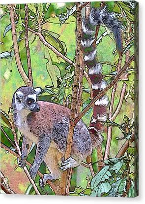 Lemur Sketch Canvas Print by Dan Dooley