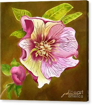 Lenten Rose Canvas Print by Joan A Hamilton