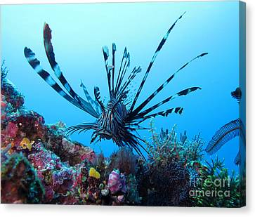 Leon Fish Canvas Print by Sergey Lukashin