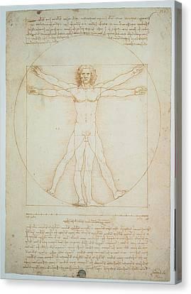 Leonardo Da Vinci, Vitruvian Man - Canvas Print by Everett