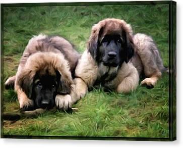 Leonberger Puppies Canvas Print by Gun Legler