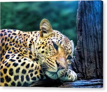Canvas Print featuring the photograph Leopard 1 by Dawn Eshelman