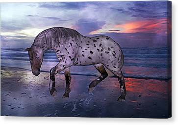 Leopard Appaloosa Canvas Print by Betsy Knapp