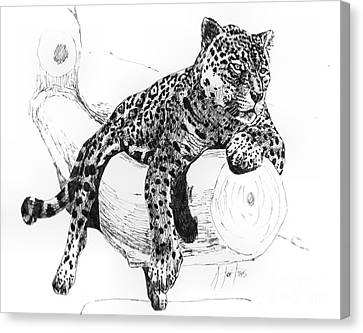 Leopard At Rest  Canvas Print by Audrey Van Tassell