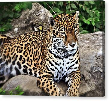 Leopard At Rest Canvas Print by Marty Koch