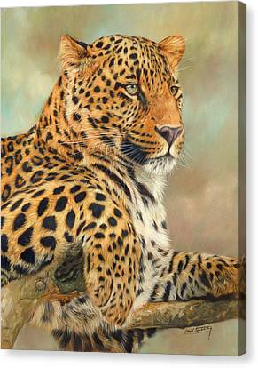 Elephants Canvas Print - Leopard by David Stribbling