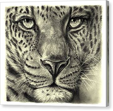 Canvas Print featuring the drawing Leopard by Heidi Kriel