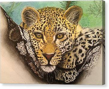 Leopard In A Tree I. Canvas Print