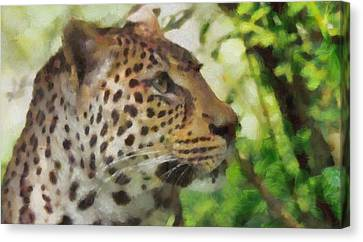 Leopard In The Wild Canvas Print by Dan Sproul