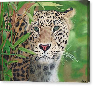 Leopard In The Woods Canvas Print by Alina Kaplanov