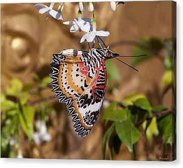 Canvas Print featuring the photograph Leopard Lacewing Butterfly Dthu619 by Gerry Gantt