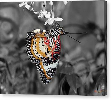 Canvas Print featuring the photograph Leopard Lacewing Butterfly Dthu619bw by Gerry Gantt