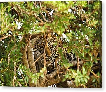 Leopard On Tree Canvas Print by Kongsak Sumano