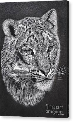 Adams Leopard - Pastel Canvas Print