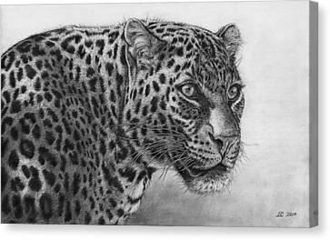 Leopard Portrait Canvas Print by Ian Cuming