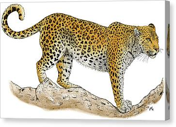 Leopard Canvas Print by Roger Hall