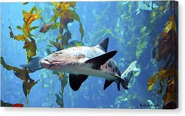 Leopard Shark Canvas Print by Barbara Snyder