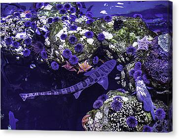 Leopard Shark Canvas Print by Garry Gay
