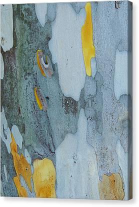Leopard Tree Bark Abstract No 1 Canvas Print