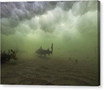 Leopard Under A Wave Canvas Print by Shane Brown
