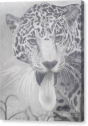 Canvas Print featuring the drawing Leopard by Wil Golden