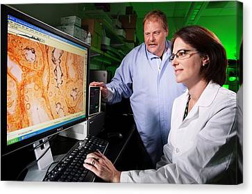Leptospira Bacteria Research Canvas Print by Peggy Greb/us Department Of Agriculture