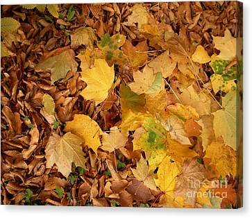 Les Feuilles Mortes Canvas Print by Mariana Costa Weldon