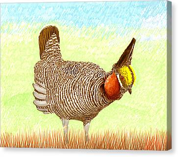 Lesser Prairie Chicken Canvas Print