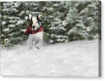 Snow Day Canvas Print by Shelley Neff