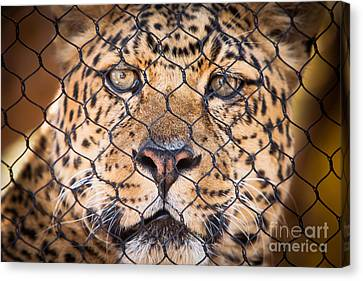 Let Me Out Canvas Print by John Wadleigh
