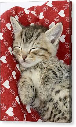 Let Me Sleep Canvas Print by Greg Cuddiford