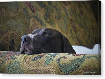 Canvas Print featuring the photograph Let Sleeping Dogs Lie. by Phil Abrams
