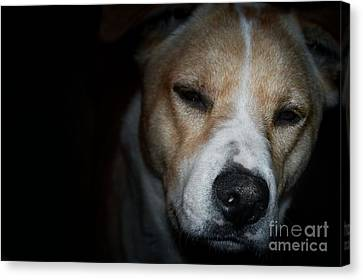 Let Sleeping Dogs Lie. Canvas Print by Tim Kravel