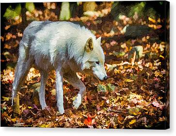 Let The Timber Wolf Live Canvas Print by John Haldane