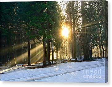 Sun Rays Canvas Print - Let There Be Light - Sun Beams Pouring Through A Forest Scene. by Jamie Pham