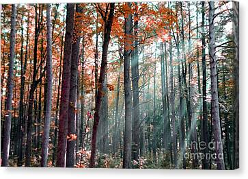 Let There Be Light Canvas Print by Terri Gostola