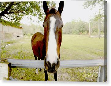Let's Go For A Ride Canvas Print by Jon Neidert