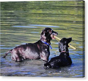 Let's Play In The River Canvas Print